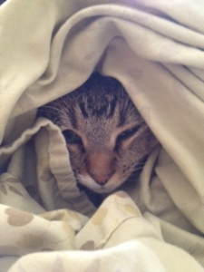 Kitty doesn't want to get out of bed